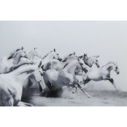 White & Grey Horses Tempered Glass Art Print