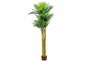 Ornamental Extra Large Palm Trees in Black Pot
