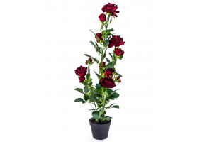 Ornamental Red Rose Plant in Black Pot