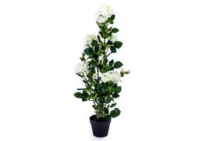 Ornamental White Rose Plant in Black Pot
