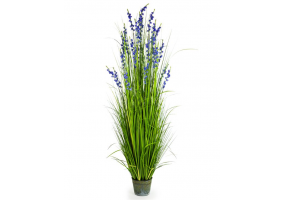 Ornamental Grasses in Galvanised Pot